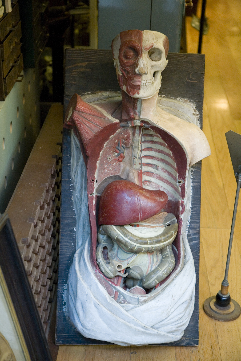 Morbid Anatomy: Obscura Antiques and Oddities, NYC